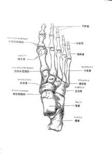 骨 の 名前 足 の